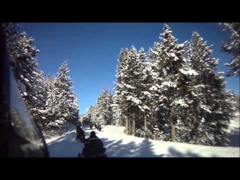 Bison while snowmobiling in Yellowstone 2013