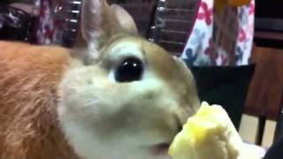 Кролик ест банан