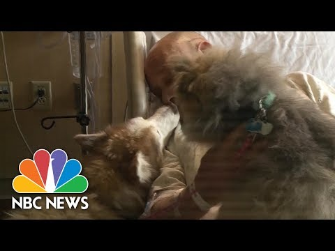 Man Reunited With Dogs He Lost In Wisconsin Tornado | NBC News