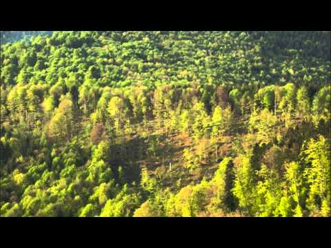 "Shostakovich ""Song of the Forests"" Yevgeny Mravinsky"