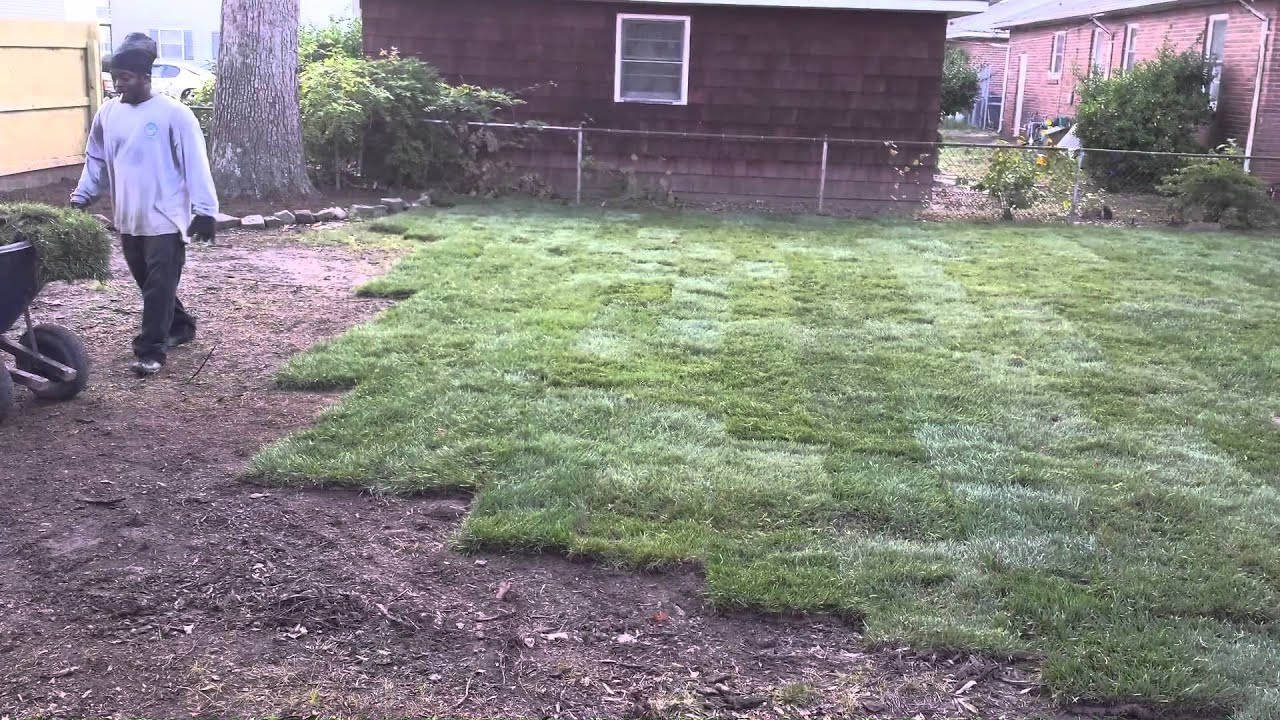 fescue sod installation project virginia beach va 757 292 9415