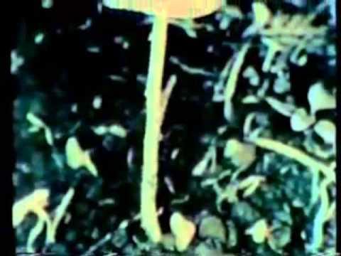 R  Gordon Wasson video footage