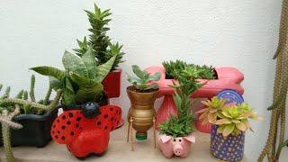 Plantas Lindas em Vasos Recicláveis – Aprenda a Reutilizar