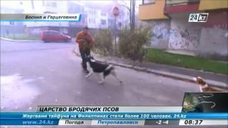 В Боснии бродячие собаки нападают на людей
