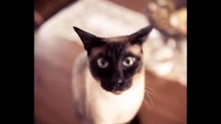 Сиамские Кошки /T.A./