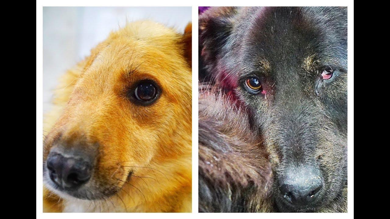 yellow-dog-vs-black-dog-they-are-the-same-dog