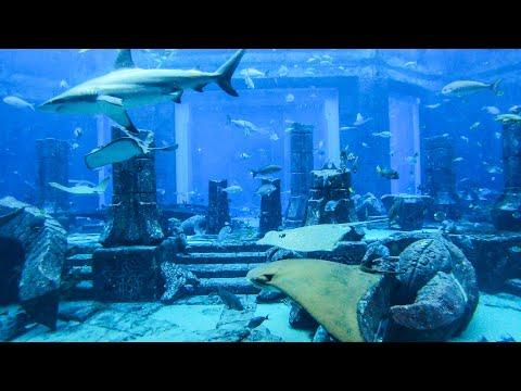 Huge Aquarium at Dubai Atlantis The Palm Hotel and Centre. United Arab Emirates