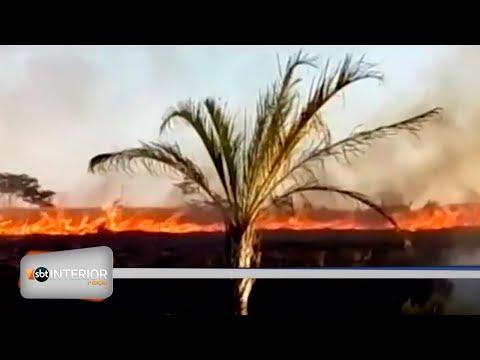 Incêndio atinge pastagem no bairro Fraternidade, em Rio Preto