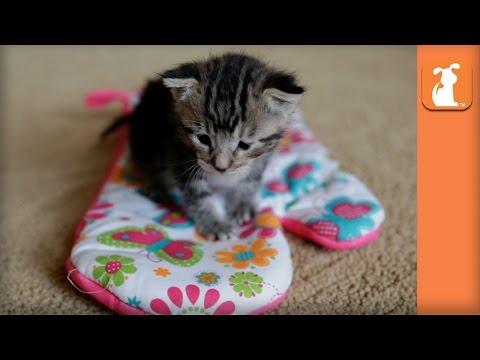 Most Adorable Kitten Inside Oven Mitt - Kitten Love