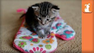 Most Adorable Kitten Inside Oven Mitt  Kitten Love