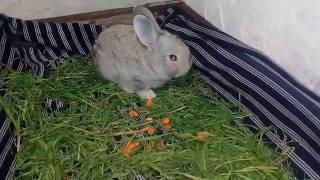 Обзор няшных крольчат великанов 3 недельки малюткам. Великанша самка №1.