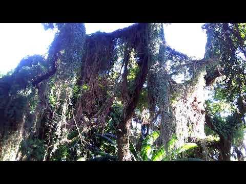 Comoros   Rain Forest Near Salimani Hambao