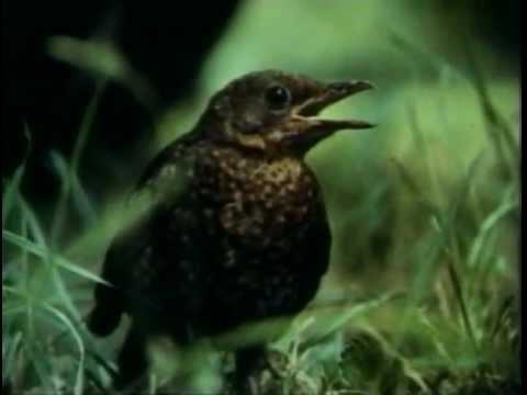 Nekromantik 2 (1991) Trailer