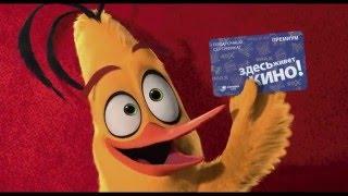 «Angry Birds в кино» — подарочные сертификаты СИНЕМА ПАРК