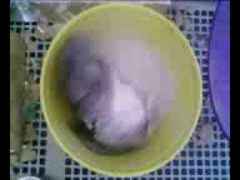 Chinchilla Bath - (Boring Ass Videos)