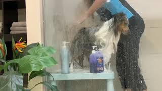 HOW TO BATH YOUR DOG! SHELTIES, SHETLAND SHEEPDOGS, DOUBLECOATED BREEDS AND LONG HAIRED DOGS.
