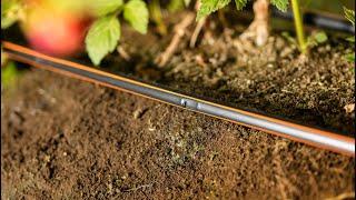 Curso en línea Streamline™️ X - La línea de goteo de pared delgada más resistente