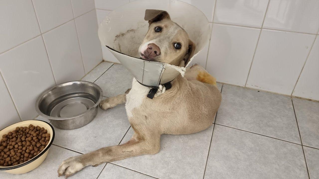 🔴Бездомная собака с переломаными лапами после ДТП провела два месяца в клинике!😯 Как она сейчас?