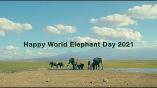 Happy World Elephant Day 2021