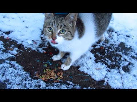 Hungry kitten is sitting in the snow and eats dry food
