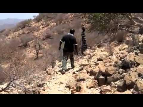 The frankincense and myrrh trail of Somaliland