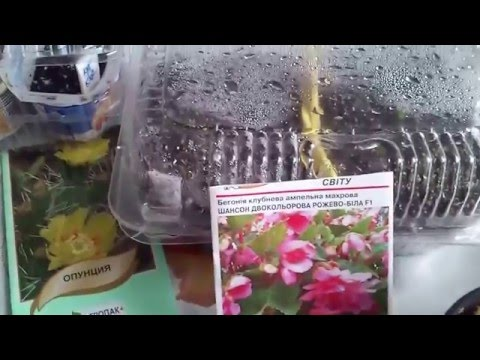 Сеянцы комнатных растений из семян