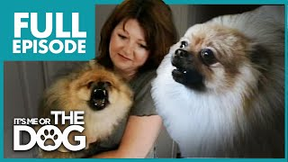 Monster Pomeranian: Teddy PomPom | Full Episode | It's Me or the Dog