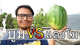 บูม-vs-แตงโม