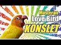 Masteran Lovebird Konslet Ampuh  Mp3 - Mp4 Download