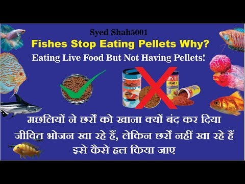 Fish Stop Eating Pellets HOW TO Trick Your Aquarium Fish Into Eating!