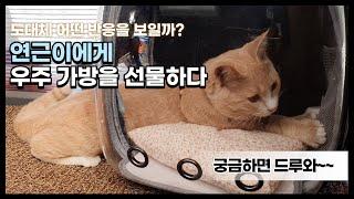 [번외편] 고양이 우주가방 - 연근이에게 우주가방을 선…