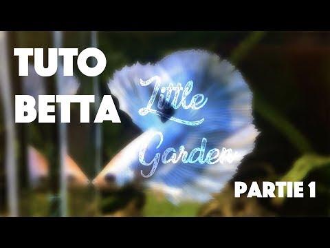 TUTO#1 : Le combattant (Betta) ! PART 1