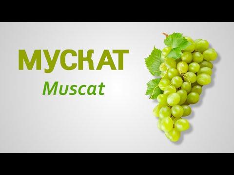Сорт винограда Мускат Muscat
