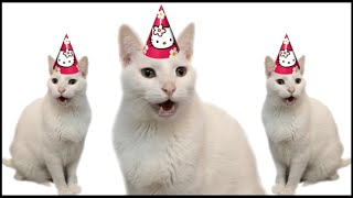 HAPPY BIRTHDAY FROM THE CATS
