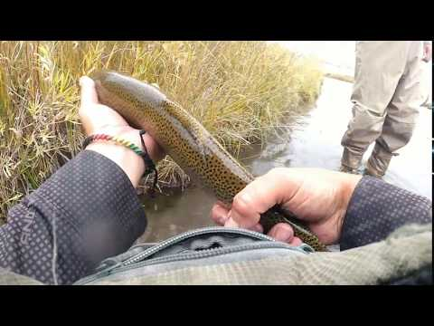 Dream Stream Fly Fishing In The Fall