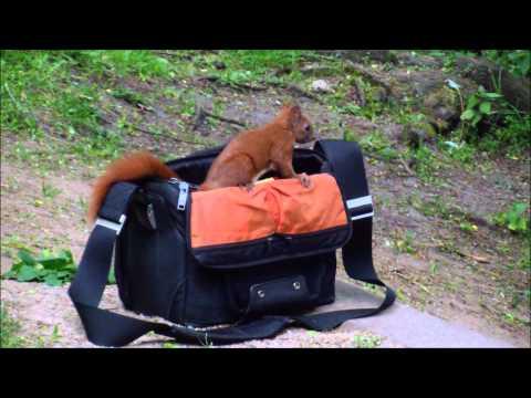 Neugierige Eichhörnchen im Hamburger Wind