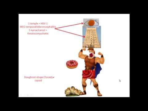 Вирус простого герпеса - ВПГ, Herpes simplex virus HSV