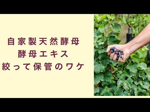 【自家製天然酵母】酵母エキスを絞って保存する理由 フルーツ酵母 自家製天然酵母 パン教室 教室開業 大阪 奈良 東京 福岡 名古屋