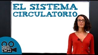 Sistema circulatorio importantes del hechos