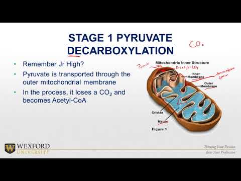 Cellular Respiration Biology Review | Fitness Education Review