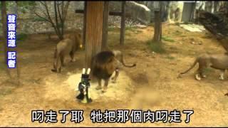 壽山動物園歡慶復活節 黑熊 猩猩玩「彩蛋」 thumbnail