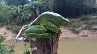 Healing Through Frog Poison?