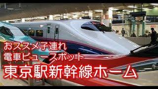 【子連れ電車ビュースポット】JR東京駅 乗車券なしでも新幹線を見放題!
