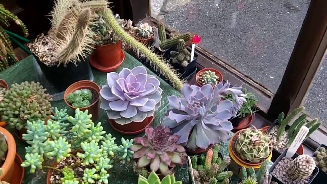 How To Care For Grow Echeveria Succulent Plants Youtube