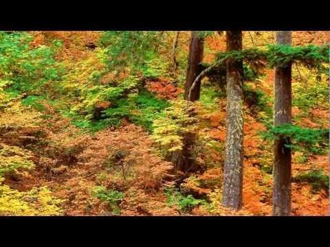 Bandari -  The Sound Of Silence mp3