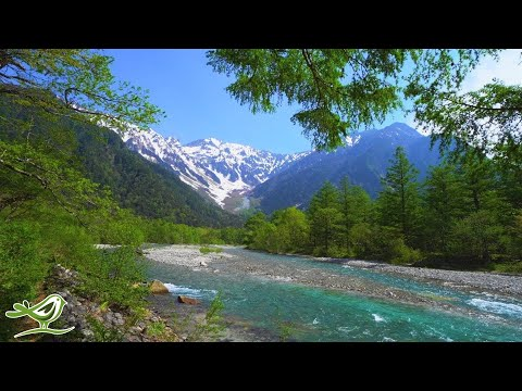 Beautiful Relaxing Music: 'My Rose' by Peder B. Helland