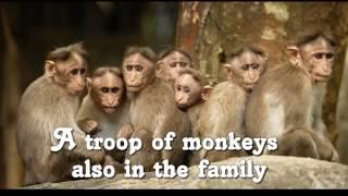 Animals Collective Nouns