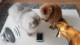 Cats React To ANIMAL SOUNDS
