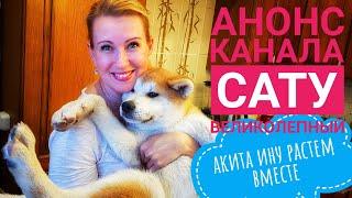 """Анонс канала """"Сату Великолепный"""". Акита Ину - жизнь и приключения"""