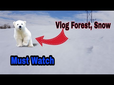 OMG! Too Much SNOW + Forest Snow BG Poonch Balakote Checkout Tech Hindi  Vlog